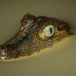 20130924_reserva.playa.tortuga.caiman-6