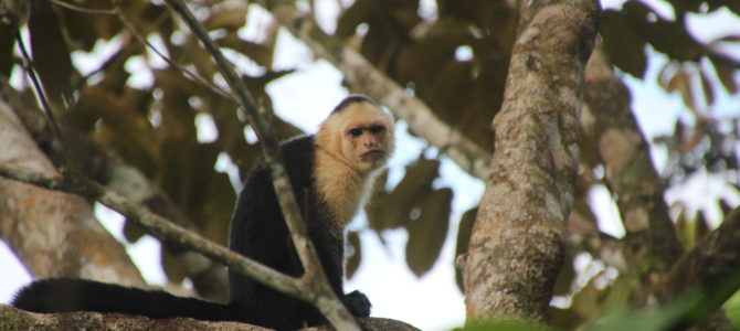 Want to know what the Monkeys Monitoring Project is about?