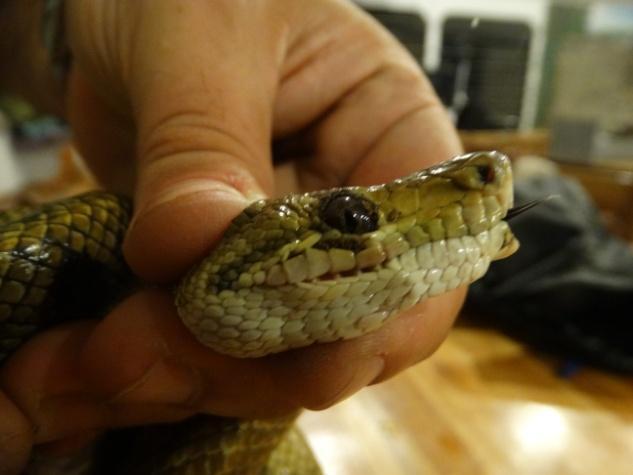 Joris van de Ven snake