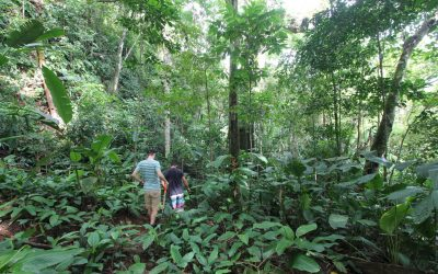Now Reserva Playa Tortuga has guided tours for the public