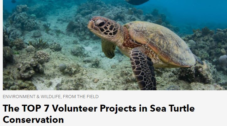 RPT is featured and listed as number 1 Sea Turtle Conservation project by Working Abroad