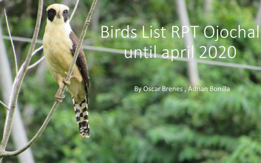 Now you can download our bird list and identify the species in your garden